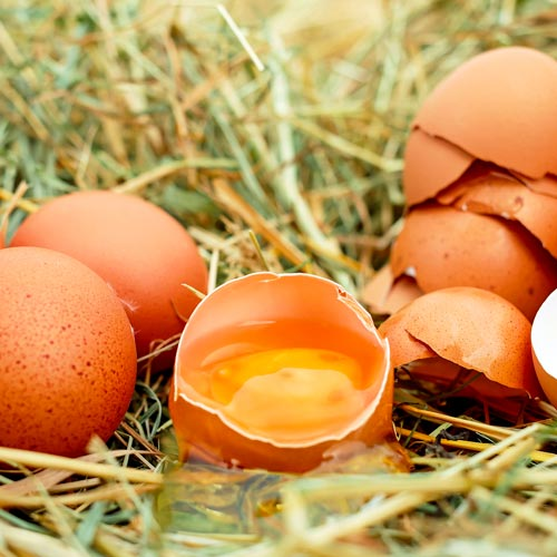nutrizione crossfit uova